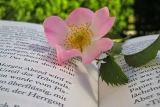livre-bonheur-selection