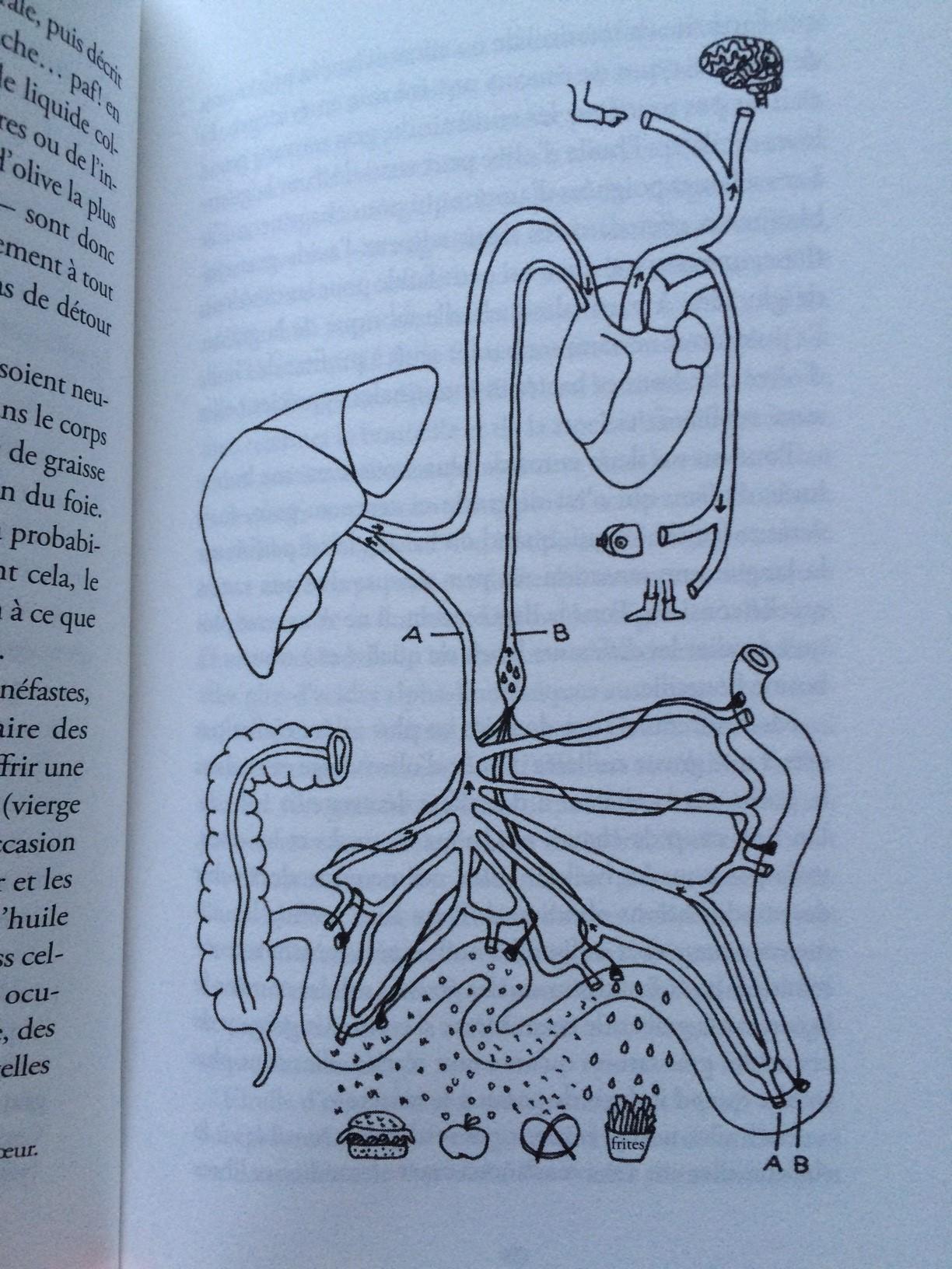 le ventre second cerveau