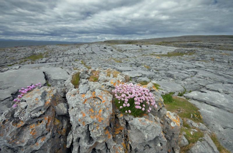 Ireland-the-Burren