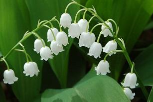 La fleur du bonheur - HappyCulture et vous